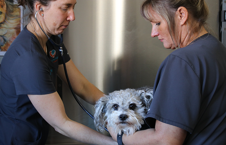 Dog at hospital